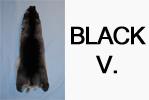 Blana chinchilla de tipul Black V.