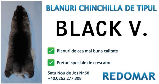 Blanurile de chinchilla de tipul black velvet - Redomar SRL